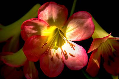 Florals Photograph - Trumpet Lilies by David Patterson