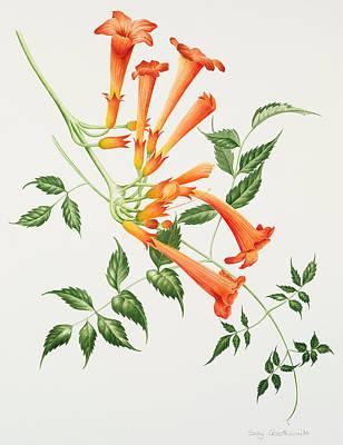 Trumpet Art Print by Sally Crosthwaite