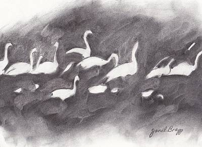 Skagit Drawing - Trumpeter Swans Skagit Valley In Charcoal by Janel Bragg