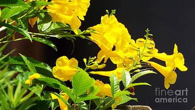 Photograph - Trumpetflower by Audrey Van Tassell