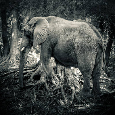 Photograph - Trunk by Mike Lanzetta