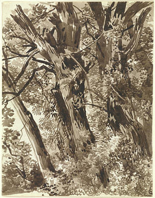 Wash Drawing - Trunks And Branches Franz Innocenz Kobell by Litz Collection