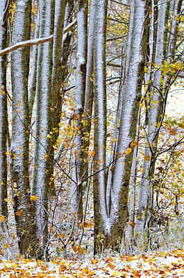 Photograph - Trunks And Leaves by Susan Leggett