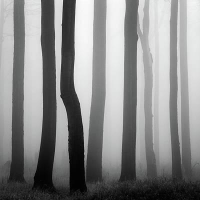 Mist Photograph - Trunks by Martin Rak