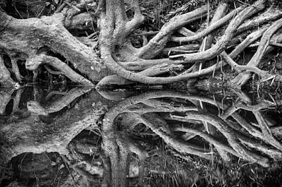 Photograph - Trunks On The River Bank by Carolyn Marshall