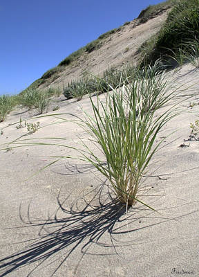 Photograph - Truro Dunes by Michael Friedman