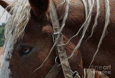 Equestrian Apparel Photograph - Trusted Friend 2 by Yvonne Wright