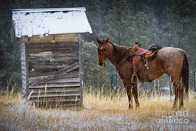 Waiting Photograph - Trusty Horse  by Inge Johnsson
