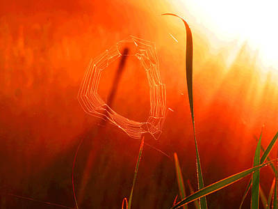 The Spider's Web In Golden Sunlight Art Print