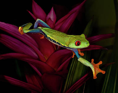 Tree Frogs Photograph - Trying To Get Away by Gloria Matyszyk