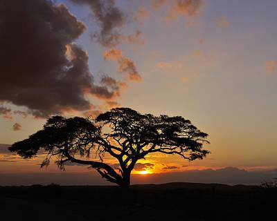 Photograph - Tsavo Sunset by Tony Beck