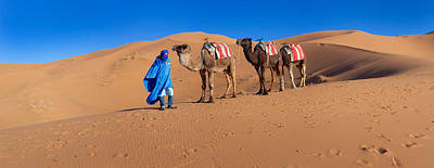 Camel Photograph - Tuareg Man Leading Camel Train by Panoramic Images