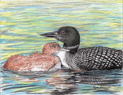 Loon Drawing - Tuckin In by Ryan Lamoureux