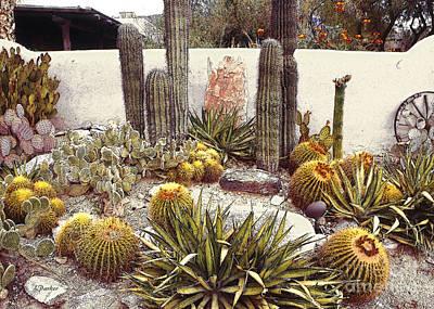 Tucson Digital Art - Tucson Desert Garden by Linda  Parker