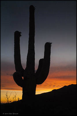 Photograph - Tucson Sunset by Erika Fawcett