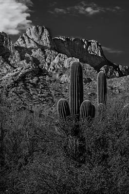 Mark Myhaver Royalty Free Images - Tucson Topo Royalty-Free Image by Mark Myhaver