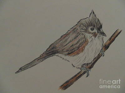 Titmouse Drawing - Tuffed Titmouse by Ginny Youngblood