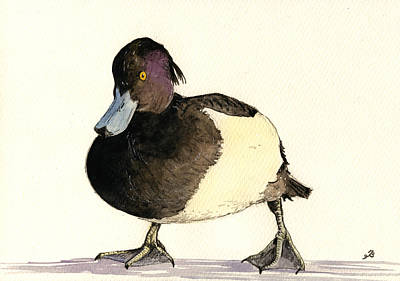 Bird Watercolor Painting - Tufted Duck by Juan  Bosco