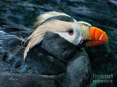 Tufted Puffin Profile Art Print