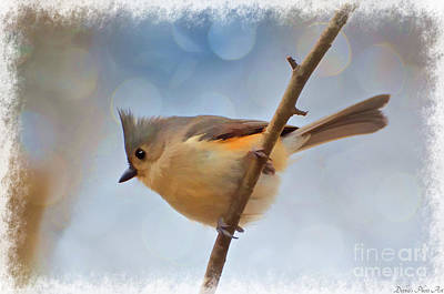 Tufted Titmouse Photograph - Tufted Titmouse - Digital Paint II With Frame by Debbie Portwood