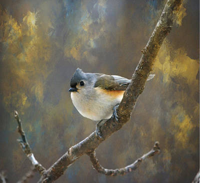 Photograph - Tufted Titmouse 2 by Deena Stoddard