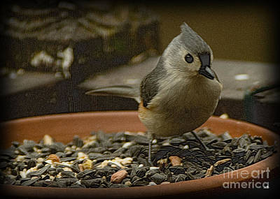 Photograph - Tufted Titmouse 2 by Sandra Clark