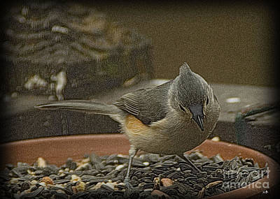 Photograph - Tufted Titmouse 3 by Sandra Clark