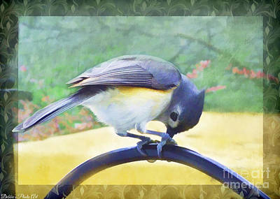 Tufted Titmouse Photograph - Tufted Titmouse At Work - Digital Paint by Debbie Portwood