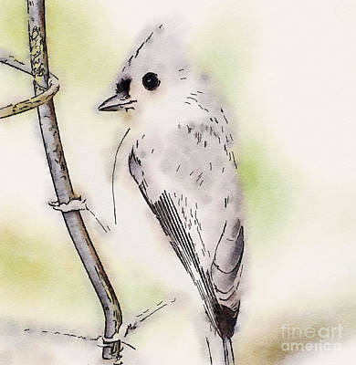 Titmouse Photograph - Tufted Titmouse Digital Art by Kerri Farley
