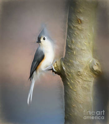 Titmouse Photograph - Tufted Titmouse Holding On by Kerri Farley