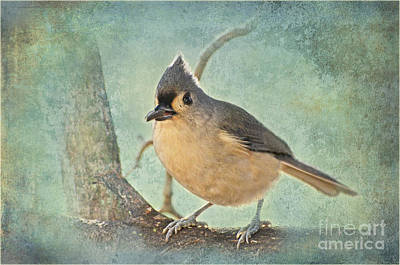 Tufted Titmouse Photograph - Tufted Titmouse IIi by Debbie Portwood