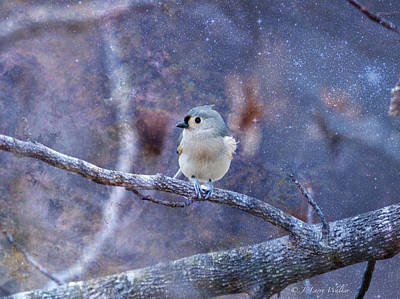 Titmouse Digital Art - Tufted Titmouse by J Larry Walker