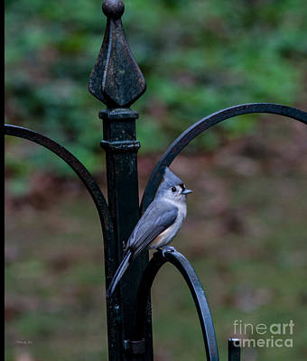 Titmouse Digital Art - Tufted Titmouse  by Jinx Farmer
