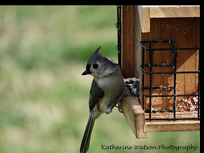 Tufted Titmouse Digital Art - Tufted Titmouse by Katherine Strickland