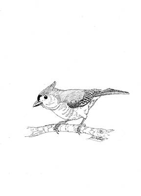 Tufted Titmouse Drawing - Tufted Titmouse by Lee Halbrook