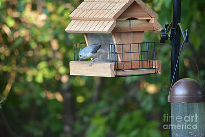 Tufted Titmouse On Feeder Original by Ruth  Housley