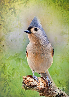 Tufted Titmouse Photograph - Tufted Titmouse Standing Tall by Debbie Portwood