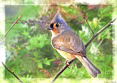 Tufted Titmouse Photograph - Tufted Titmouse Summer by Debbie Portwood