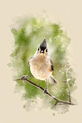 Mixed Media - Tufted Titmouse - Watercolor Art by Christina Rollo