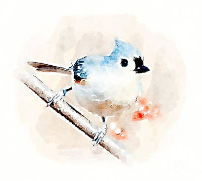 Watercolor Photograph - Tufted Titmouse - Watercolor  by Kerri Farley