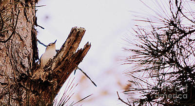 Tufted Titmouse Digital Art - Tufted Titmouse Winter by Karin Everhart
