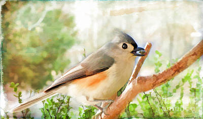 Tufted Titmouse Photograph - Tufted Titmouse With Seed - Digital Paint by Debbie Portwood
