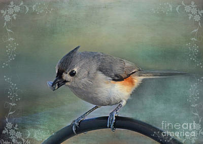 Tufted Titmouse Photograph - Tufted Titmouse With Seed by Debbie Portwood