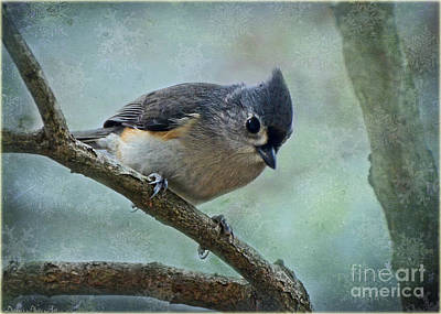 Tufted Titmouse Photograph - Tufted Titmouse With Snowflake Decorations by Debbie Portwood