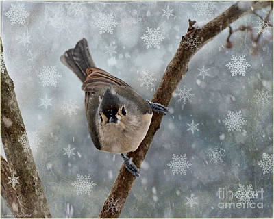 Tufted Titmouse Photograph - Tufted Titmouse With Snowflake Photoart by Debbie Portwood