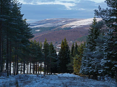 Photograph - Tulchan Estate - Early Winter by Phil Banks