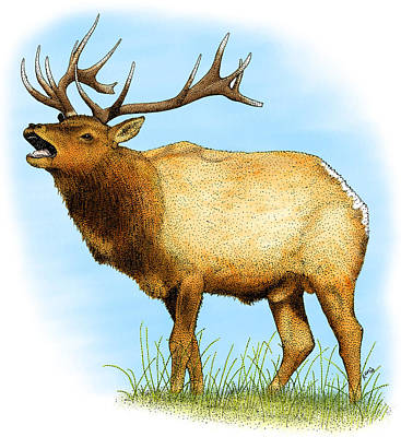 Photograph - Tule Elk by Roger Hall