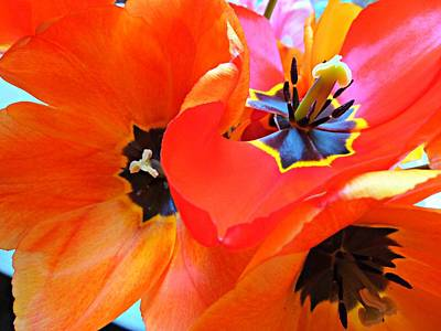 Photograph - Tulip 2 by Debra Collins