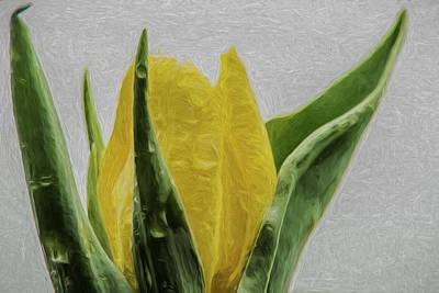 Photograph - Tulip 2 Digital Painting Flower by David Haskett