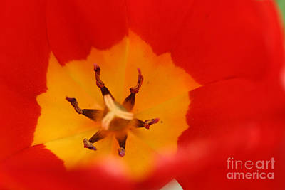 Photograph - Tulip Collection Photo 3 by Rusty Green